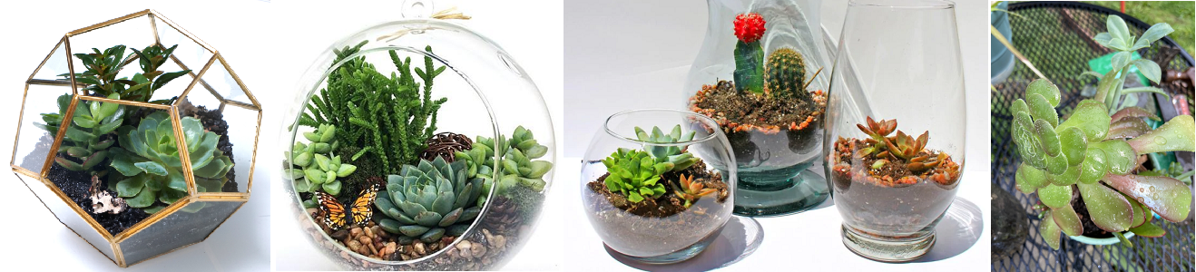 Succulent Terrarium Workshop Party