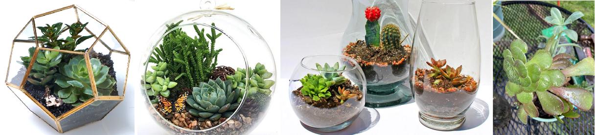 Succulent Terrarium Workshop Party