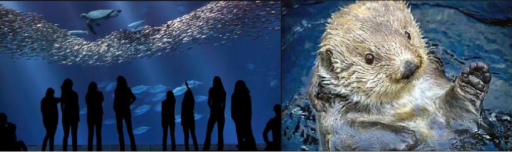 Monterey Aquarium Passes
