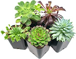 Succulent Six Pack