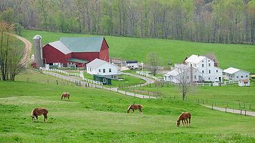 AmishBanner.jpg