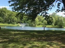 Swimming lake view