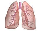 lung pic.jpg
