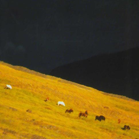 Ponies, Iceland