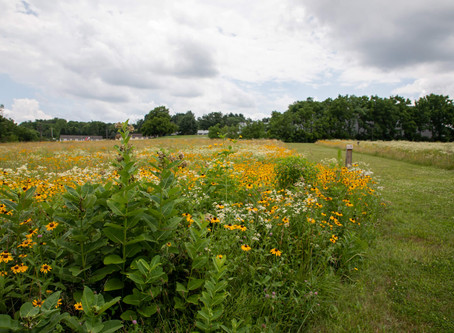 Flowers, Birds and Pollinators