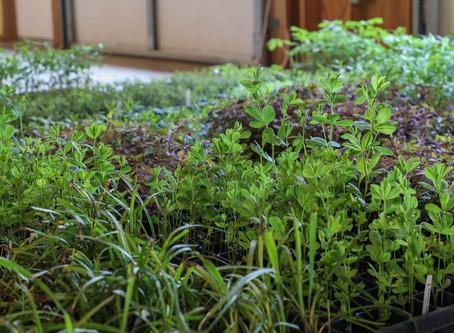 Plants Delivered!