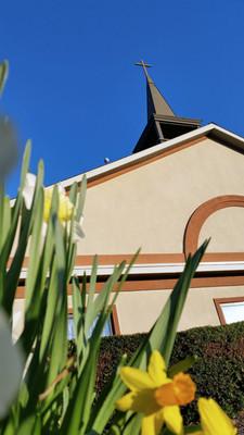 March Daffodils