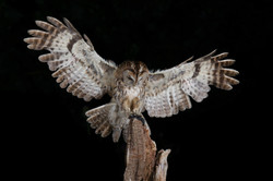 oiseau-DRUESNE-Philippe-n°1