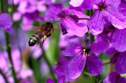 recolte de polen small