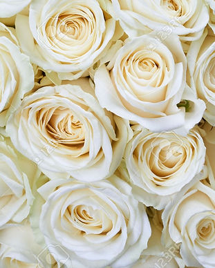 36111316-many-white-roses-as-a-floral-ba