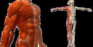 Musculo e Ligamentos