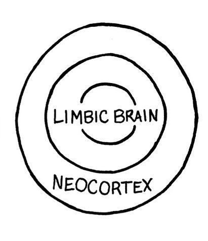 Limbic%2520brain_edited_edited.jpg