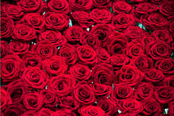 Rose Mandap 4