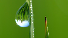 Tema 8_ Reino plantae: Nutrición vegetal