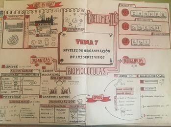 Mapas visuales sobre LA ORGANIZACIÓN DE LOS SERES VIVOS