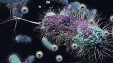 Tema 17. Microbiología II: aplicaciones y biotecnología