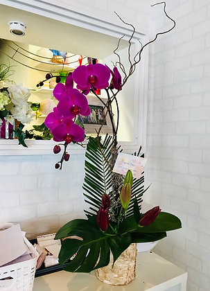 Orchid Plant - Decorative