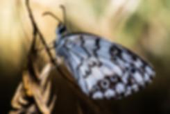 butterfly macro yossi rufman