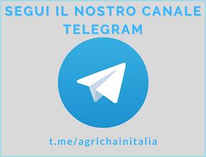 Seguici su Telegram.png