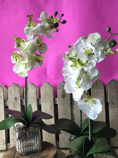 Forever Flower - Single Stem Orchid