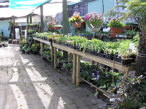 Flower Varieties