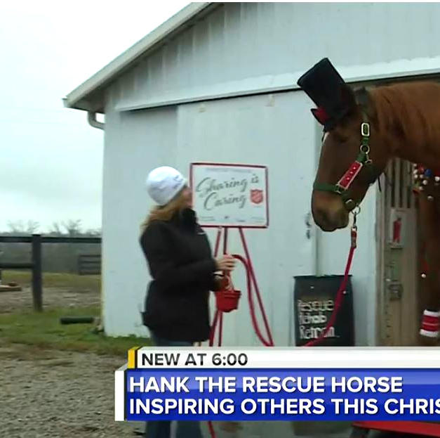 Central Kentucky Rescue Horse Speading Holiday Cheer and Helping Others