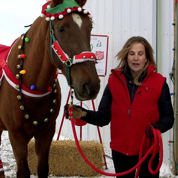 Hank the Bell Ringing Salvation Army Horse