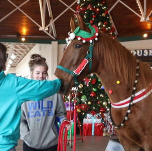 Horse Rings Bell for Salvation Army Kettle Campaign
