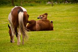 Horses at Play!