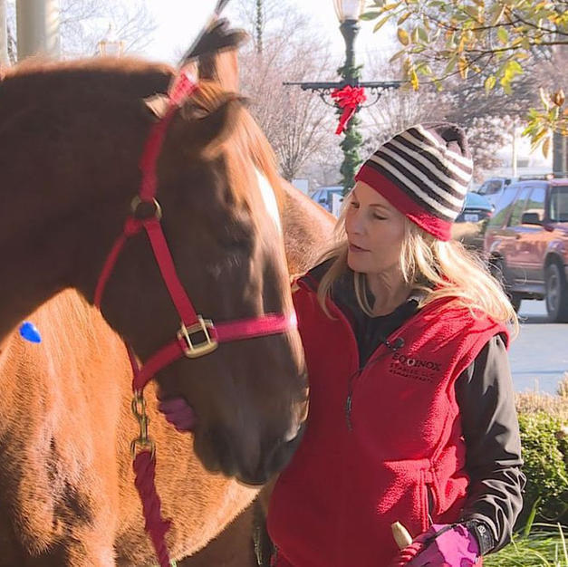 Two Rescue Horses Ring the Salvation Army Bell