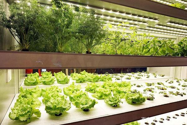 planting vege.jpeg