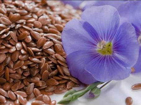 Семена льна и их польза.
