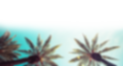 Palm Tree Banner.png