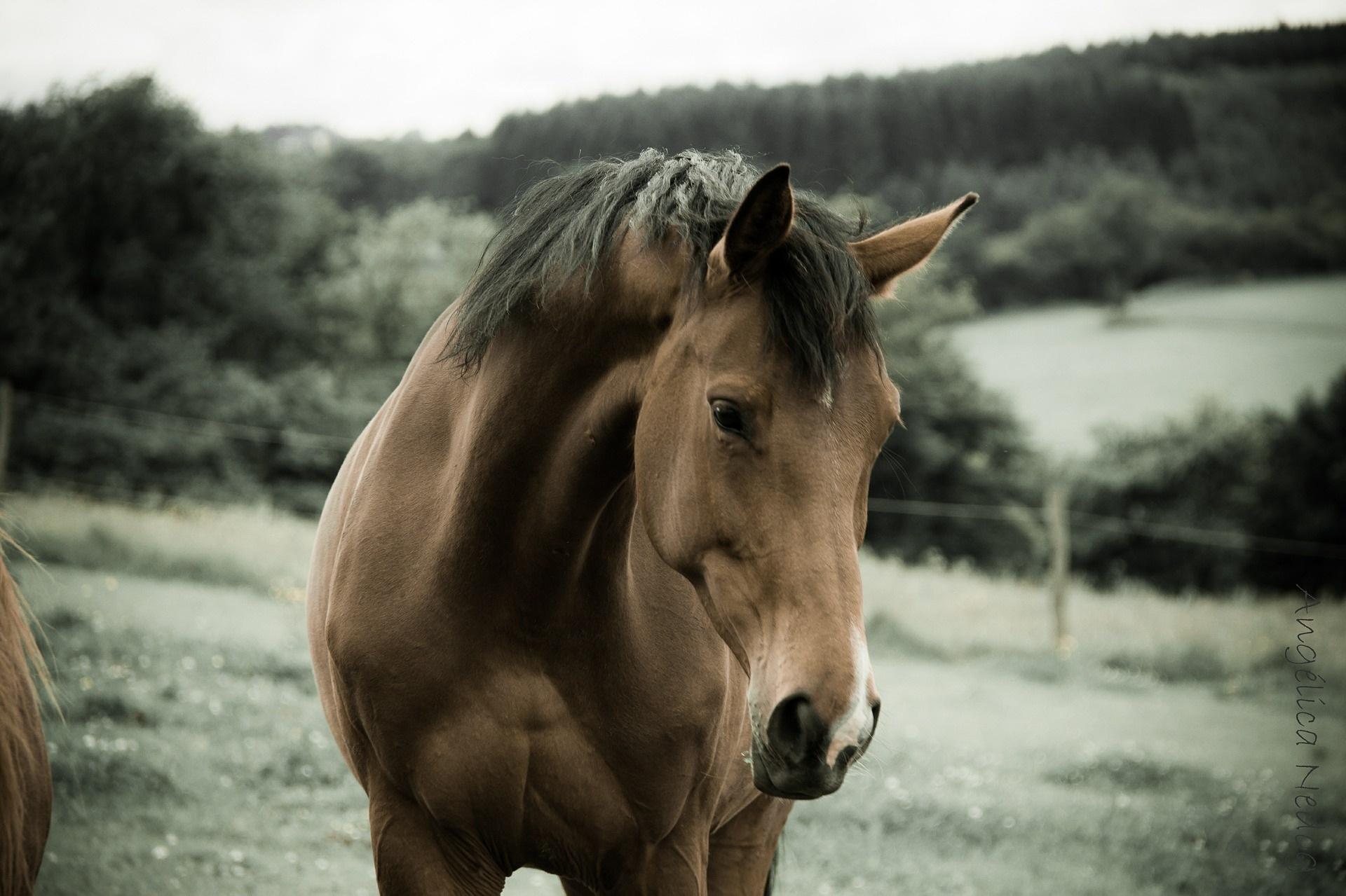 horse-458410_1920.jpg