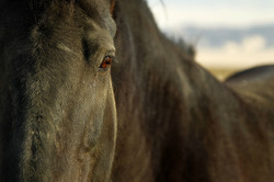 horse-89352_1920.jpg