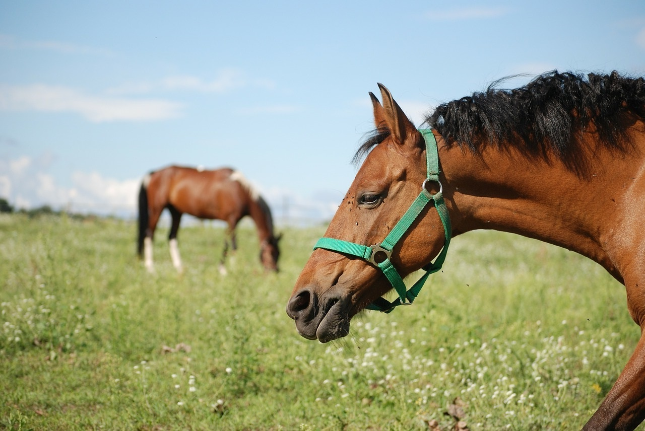 Horse performance and well-being