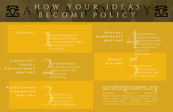 ACGA Policy Process Graphicfinal.png