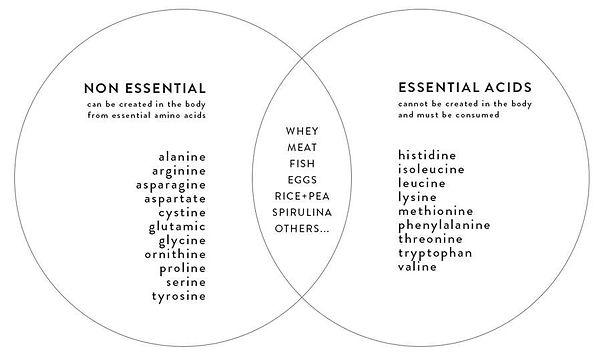 amino acids.jpg