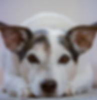 adorable-animal-animal-photography-61281