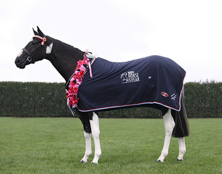 Northbrook Spellbound owned by Julie Pascoe