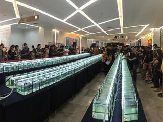Flusskrebs-Contest in Pattaya