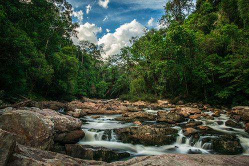 Taman Negara – der älteste Regenwald der Erde