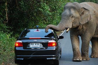 elephant-3461277_1920.jpg