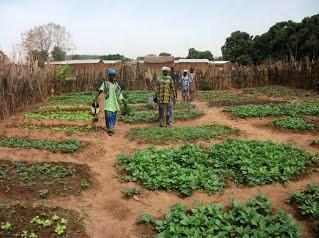 Subvention pour le projet de lutte  contre la malnutrition