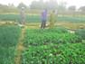 Agroécologie : 4 jours de formation dans les jardins