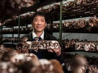 El Cultivo de hongos en China continúa floreciendo y diversificándose.