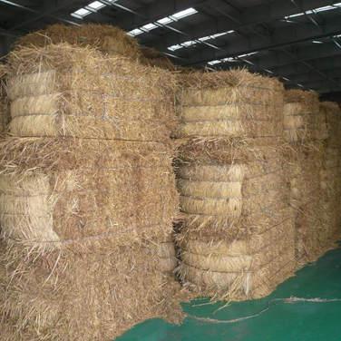 La cola de cosecha de cereales es un recurso importante para encontrar formas de poder acopiar, picar y poder distribuir para su uso como sustrato.