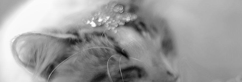 Quadro sonhos e pérolas - Frame Dreams and Pearls by Kcris Ramos
