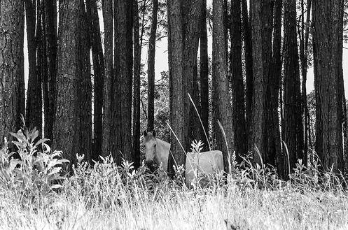 Fotografia Fine Art Cavalo das Montanhas por Kcris Ramos