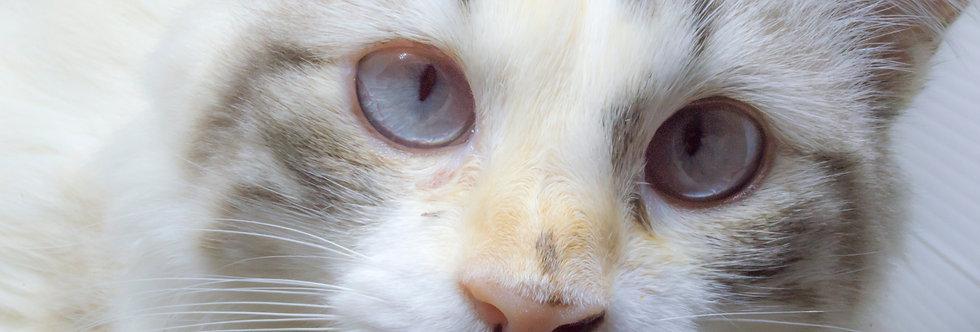 Quadro Closse de Gato Por: Kcris Ramos